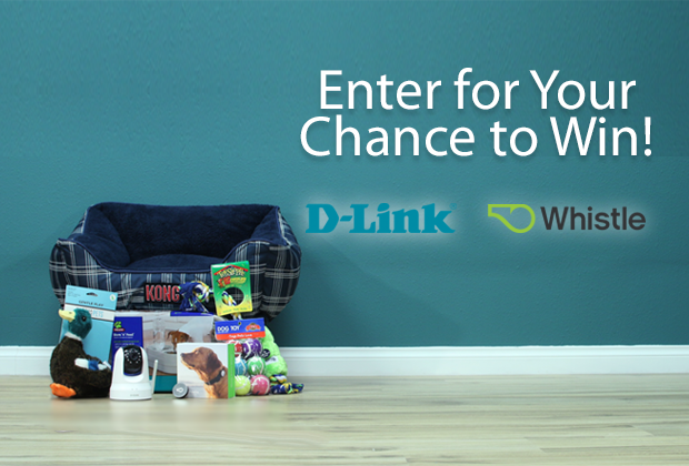 Whistle-DLink-Contest