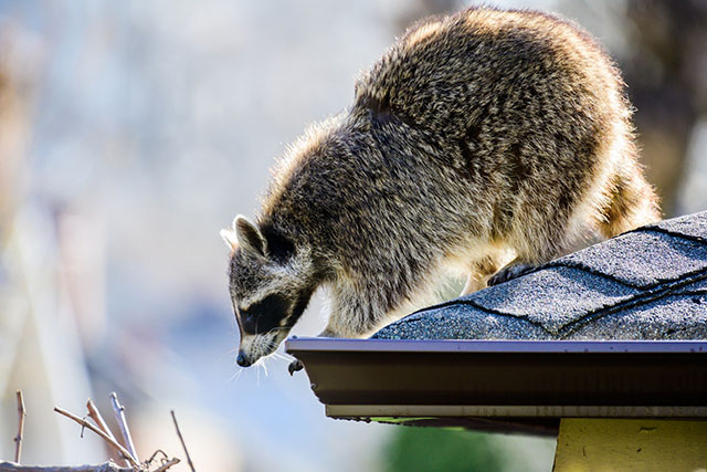 Outdoor cameras are great for security—and catching the pesky critters that get into your trash.