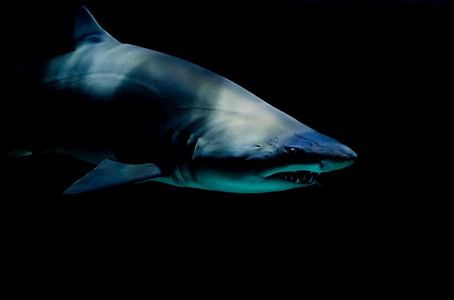 Smart plugs are great tools for aquariums—even if you have sharks in it as seen here.